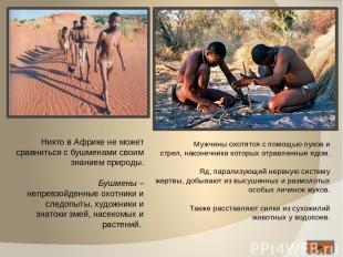 Никто в Африке не может сравниться с бушменами своим знанием природы. Бушмены –