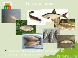 Тип хордовые Надкласс рыбы: ёрш, карась, налим, плотва, пескарь, окунь, щука, ле