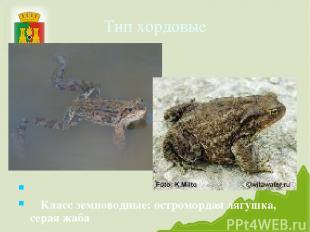 Тип хордовые Класс земноводные: остромордая лягушка, серая жаба
