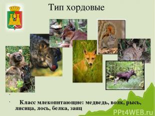 Тип хордовые Класс млекопитающие: медведь, волк, рысь, лисица, лось, белка, заяц