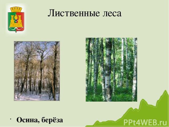 Лиственные леса Осина, берёза