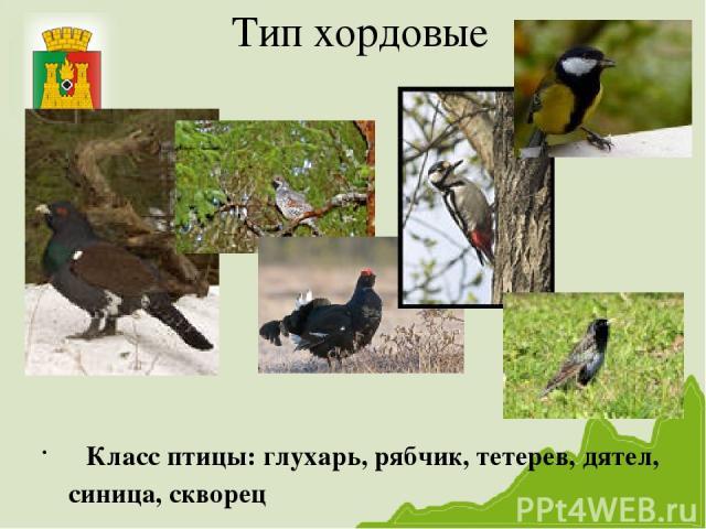 Тип хордовые Класс птицы: глухарь, рябчик, тетерев, дятел, синица, скворец