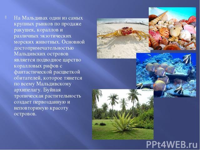 На Мальдивах один из самых крупных рынков по продаже ракушек, кораллов и различных экзотических морских животных. Основной достопримечательностью Мальдивских островов является подводное царство коралловых рифов с фантастической расцветкой обитателей…