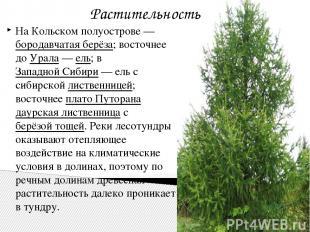 На Кольском полуострове— бородавчатая берёза; восточнее до Урала— ель; в Запад