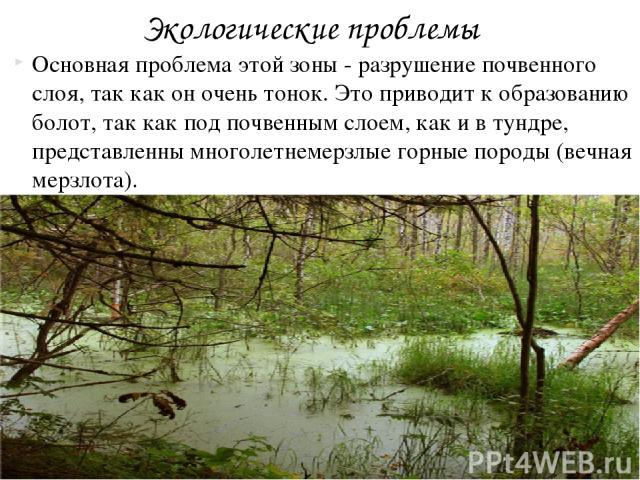 Основная проблема этой зоны - разрушение почвенного слоя, так как он очень тонок. Это приводит к образованию болот, так как под почвенным слоем, как и в тундре, представленны многолетнемерзлые горные породы (вечная мерзлота). Экологические проблемы
