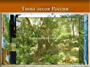 Типы лесов России Смешанный лес ТЕМНОХВОЙНАЯ ТАЙГА СВЕТЛОХВОЙНАЯ ТАЙГА ШИРОКОЛИС