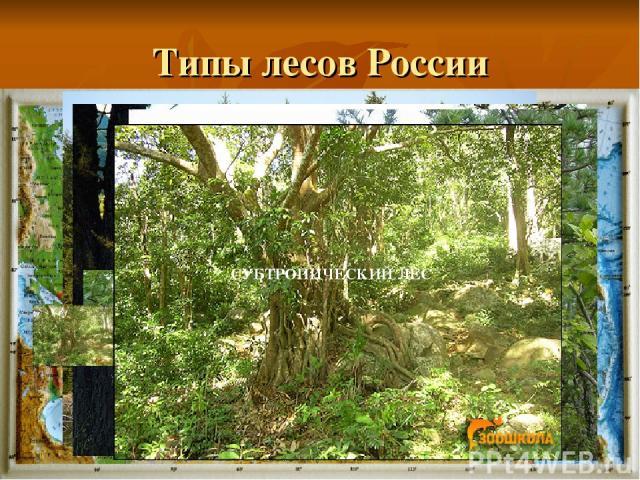 Типы лесов России Смешанный лес ТЕМНОХВОЙНАЯ ТАЙГА СВЕТЛОХВОЙНАЯ ТАЙГА ШИРОКОЛИСТВЕННЫЙ ЛЕС МУССОННЫЙ ЛЕС СУБТРОПИЧЕСКИЙ ЛЕС