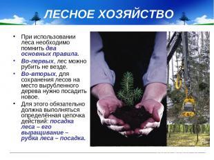 ЛЕСНОЕ ХОЗЯЙСТВО При использовании леса необходимо помнить два основных правила.