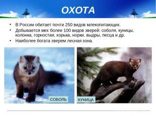 ОХОТА В России обитает почти 250 видов млекопитающих. Добывается мех более 100 в