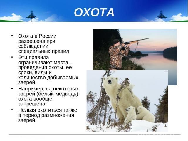 ОХОТА Охота в России разрешена при соблюдении специальных правил. Эти правила ограничивают места проведения охоты, её сроки, виды и количество добываемых зверей. Например, на некоторых зверей (белый медведь) охота вообще запрещена. Нельзя охотиться …