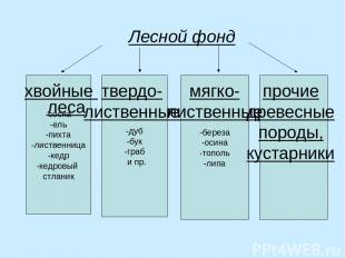 Лесной фонд -сосна -ель -пихта -лиственница -кедр -кедровый стланик -дуб -бук -г