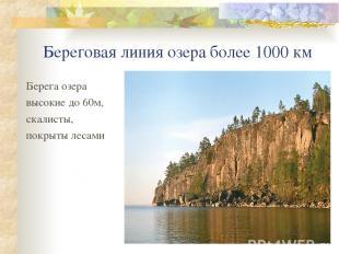 Береговая линия озера более 1000 км Берега озера высокие до 60м, скалисты, покры