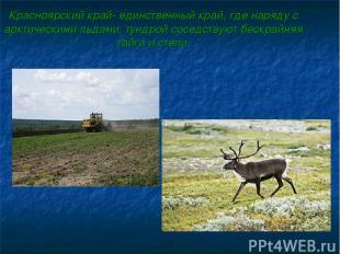 Красноярский край- единственный край, где наряду с арктическими льдами, тундрой