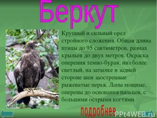 Крупный и сильный орел стройного сложения. Общая длина птицы до 95 сантиметров,