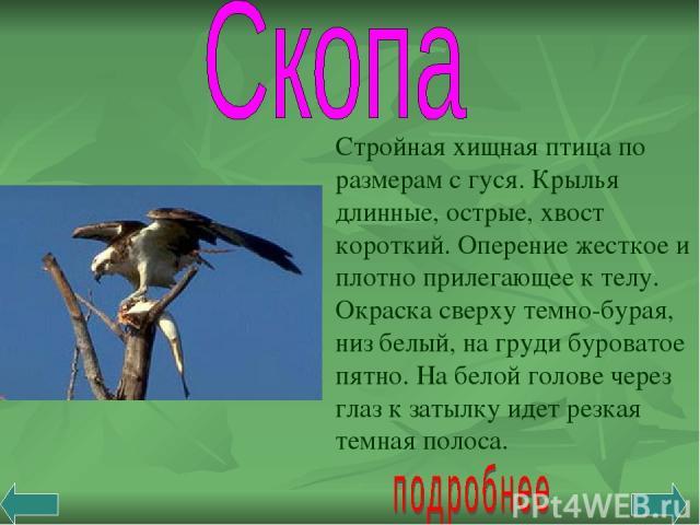 Стройная хищная птица по размерам с гуся. Крылья длинные, острые, хвост короткий. Оперение жесткое и плотно прилегающее к телу. Окраска сверху темно-бурая, низ белый, на груди буроватое пятно. На белой голове через глаз к затылку идет резкая темная …