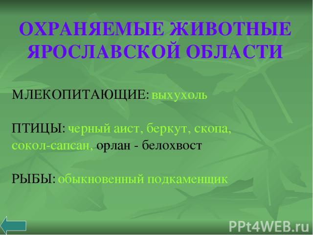 ОХРАНЯЕМЫЕ ЖИВОТНЫЕ ЯРОСЛАВСКОЙ ОБЛАСТИ МЛЕКОПИТАЮЩИЕ: выхухоль ПТИЦЫ: черный аист, беркут, скопа, сокол-сапсан, орлан - белохвост РЫБЫ: обыкновенный подкаменщик