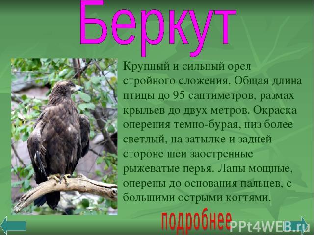 Крупный и сильный орел стройного сложения. Общая длина птицы до 95 сантиметров, размах крыльев до двух метров. Окраска оперения темно-бурая, низ более светлый, на затылке и задней стороне шеи заостренные рыжеватые перья. Лапы мощные, оперены до осно…