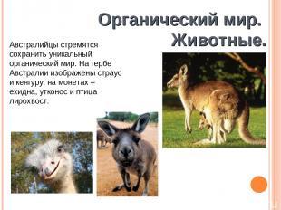 Органический мир. Животные. Австралийцы стремятся сохранить уникальный органичес