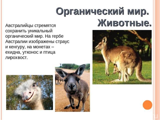 Органический мир. Животные. Австралийцы стремятся сохранить уникальный органический мир. На гербе Австралии изображены страус и кенгуру, на монетах – ехидна, утконос и птица лирохвост.