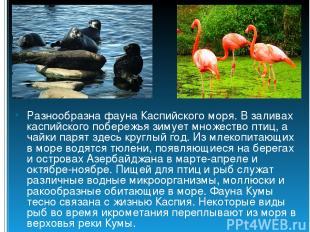 Разнообразна фауна Каспийского моря. В заливах каспийского побережья зимует множ
