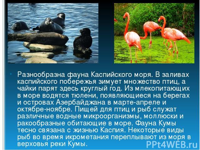 Разнообразна фауна Каспийского моря. В заливах каспийского побережья зимует множество птиц, а чайки парят здесь круглый год. Из млекопитающих в море водятся тюлени, появляющиеся на берегах и островах Азербайджана в марте-апреле и октябре-ноябре. Пищ…