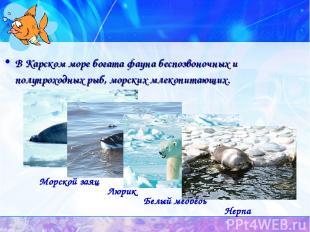 В Карском море богата фауна беспозвоночных и полупроходных рыб, морских млекопит