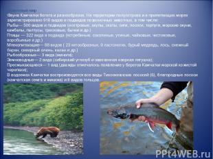 Животный мир Фауна Камчатки богата и разнообразна. На территории полуострова и в