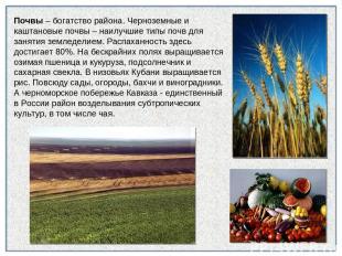 Почвы – богатство района. Черноземные и каштановые почвы – наилучшие типы почв д