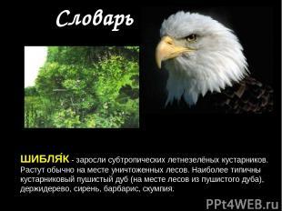 Словарь ШИБЛЯ К - заросли субтропических летнезелёных кустарников. Растут обычно