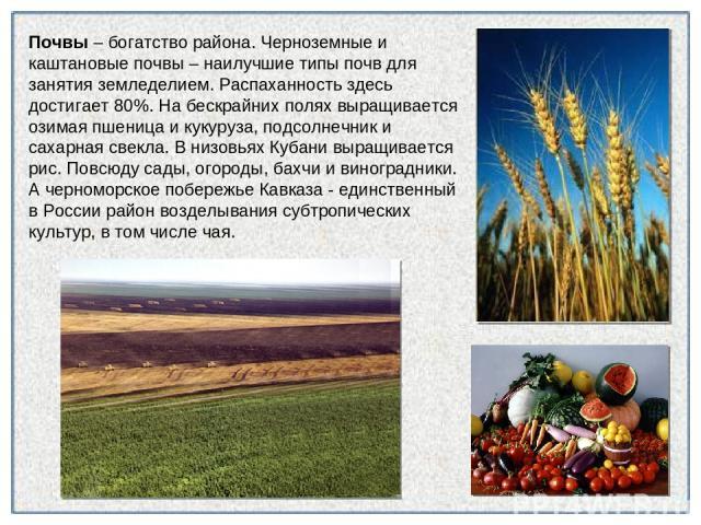 Почвы – богатство района. Черноземные и каштановые почвы – наилучшие типы почв для занятия земледелием. Распаханность здесь достигает 80%. На бескрайних полях выращивается озимая пшеница и кукуруза, подсолнечник и сахарная свекла. В низовьях Кубани …