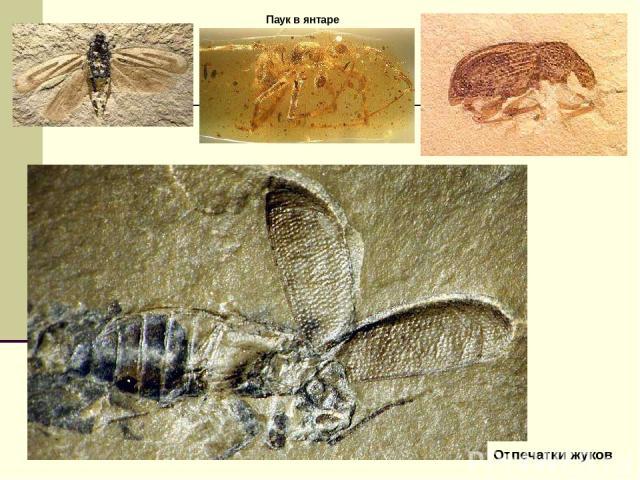 Отпечатки жуков Паук в янтаре