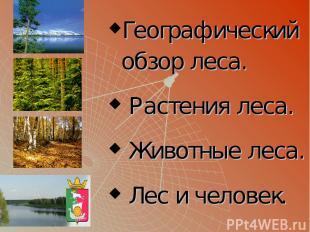 Географический обзор леса. Растения леса. Животные леса. Лес и человек.