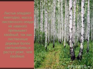 Листья опадают ежегодно, масса лиственного опада не намного превышает хвойный, т