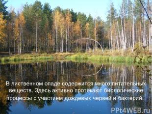 В лиственном опаде содержится много питательных веществ. Здесь активно протекают