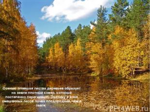 Осенью опавшая листва деревьев образует на земле плотный ковер, который постепен
