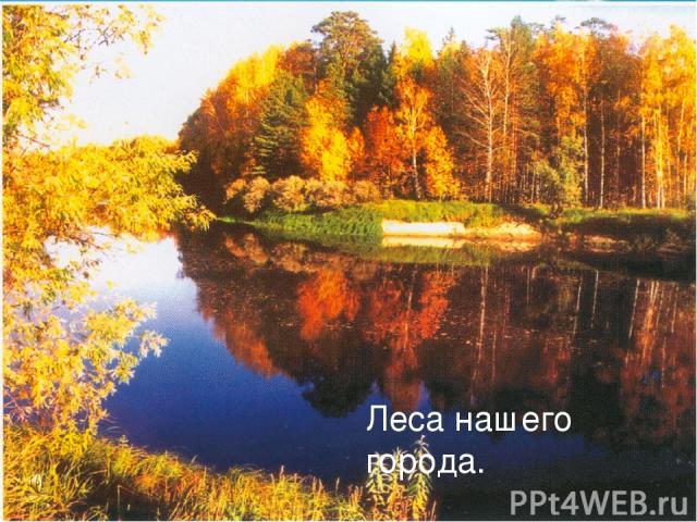 Лес –своеобразный, богатый и сложный мир, преданный, бескорыстный и постоянный спутник человека. Леса нашего города.