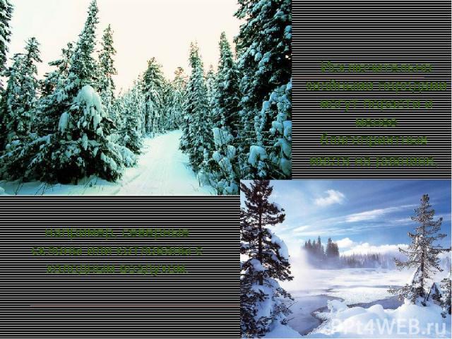 Исключительно хвойными породами могут порасти и менее благоприятные места на равнине, например, северные склоны или котлованы с холодным воздухом.