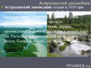Астраханский заповедник Астраханский заповедник создан в 1919 при непосредственн
