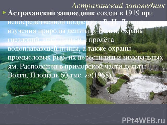 Астраханский заповедник Астраханский заповедник создан в 1919 при непосредственной поддержке В. И. Ленина для изучения природы дельты р. Волги, охраны гнездовий, мест линьки и пролёта водоплавающей птицы, а также охраны промысловых рыб, их нерестили…