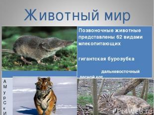 Животный мир Позвоночные животные представлены 62 видами млекопитающих гигантска