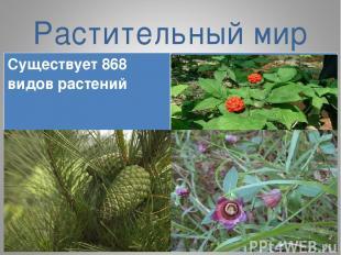 Растительный мир Существует 868 видов растений Женьшень