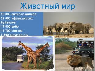 Животный мир 90 000 антилоп импала 27 000 африканских буйволов 17 800 зебр 11 70
