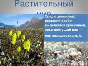 Растительный мир Среди цветковых растений особо выделяется красочный, ярко цвету