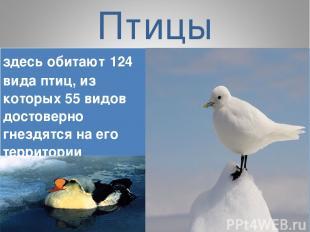 Птицы здесь обитают 124 вида птиц, из которых 55 видов достоверно гнездятся на е