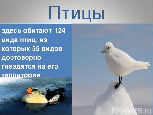 Птицы здесь обитают 124 вида птиц, из которых 55 видов достоверно гнездятся на его территории