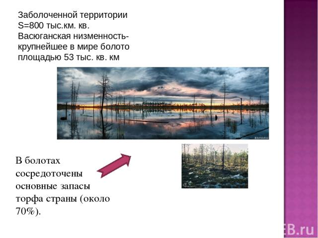 Заболоченной территории S=800 тыс.км. кв. Васюганская низменность- крупнейшее в мире болото площадью53 тыс. кв. км В болотах сосредоточены основные запасы торфа страны (около 70%).