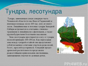 Тундра, лесотундра Тундра, занимающая самую северную часть Тюменской области (п-