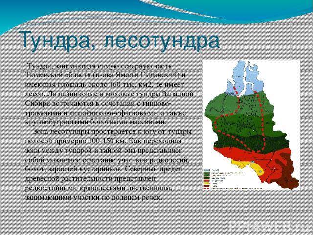 Тундра, лесотундра Тундра, занимающая самую северную часть Тюменской области (п-ова Ямал и Гыданский) и имеющая площадь около 160 тыс. км2, не имеет лесов. Лишайниковые и моховые тундры Западной Сибири встречаются в сочетании с гипново-травяными и л…