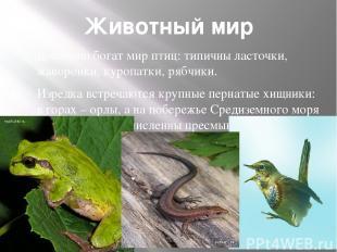 Животный мир Довольно богат мир птиц: типичны ласточки, жаворонки, куропатки, ря