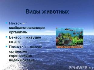 Виды животных Нектон – свободноплавающие организмы Бентос – живущие на дне Планк